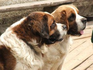 Max si Sira